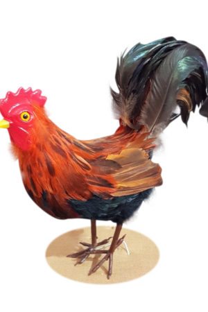 Farm Rooster  Brown
