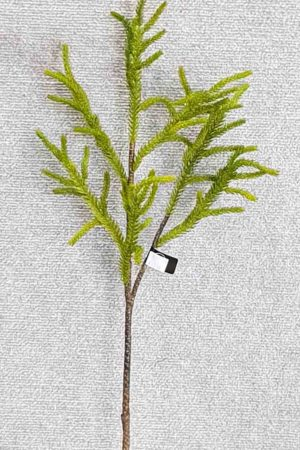 Protea Leaf Spray 62 cm