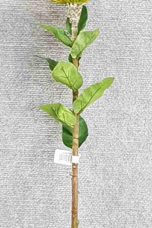 Pincushion Protea Single large – Yellow/Green
