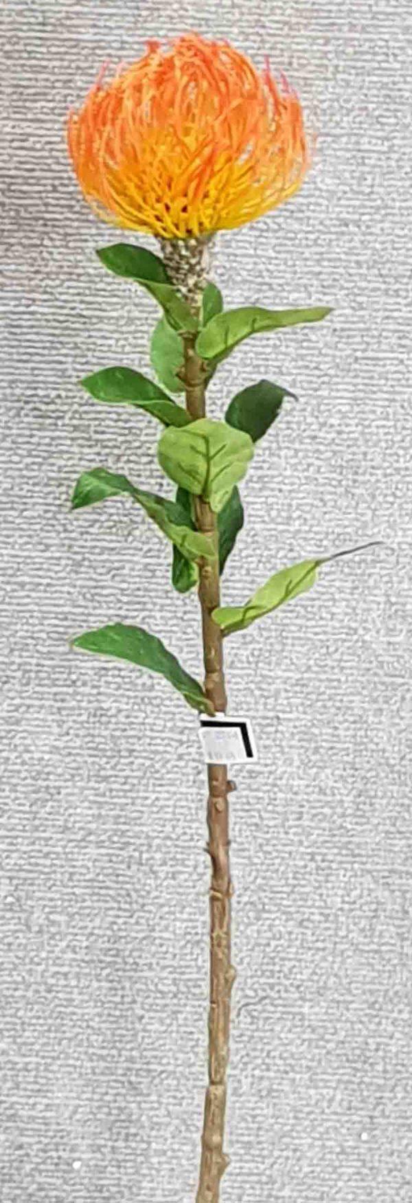 Pincushion Protea Single large – Orange
