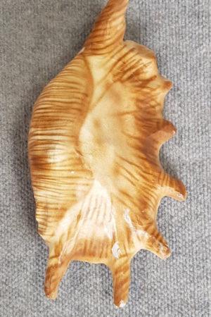 Shell Large – Papier Mache