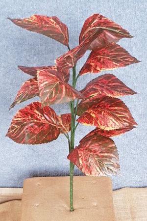 Coleus Flame Nettle x 14