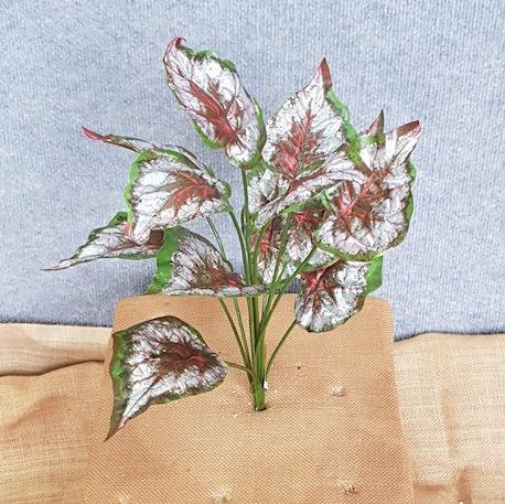 Begonia Red x 12