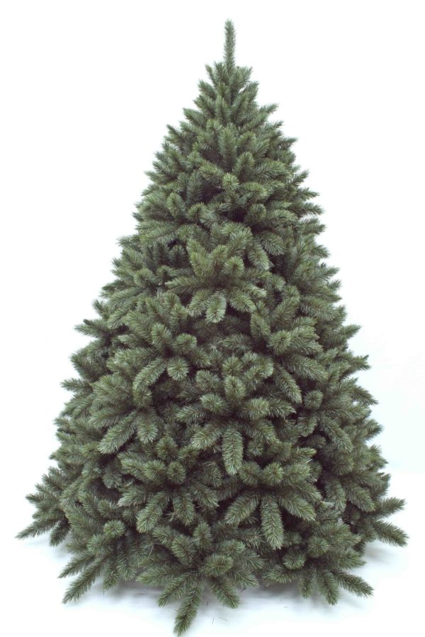 8.5ft Regal Spruce Christmas Tree New Growth Blue Green 2.59m