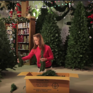How to Set Up Triumph Christmas Trees