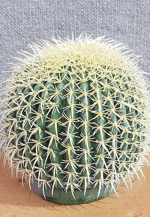 Fake Cactus – Echinocactus Grusonii Small