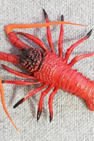 Fake Crayfish Baby