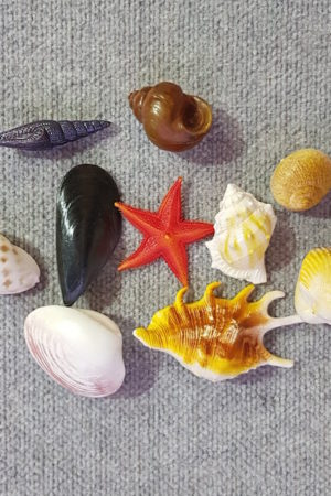 Fake Sea Shell Assorted x 10 pieces