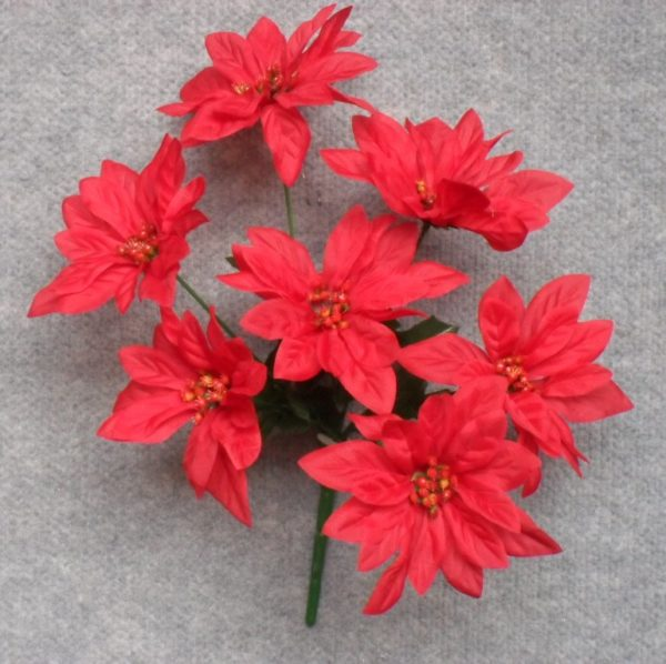 Poinsettia Bush Red x 7 Mini